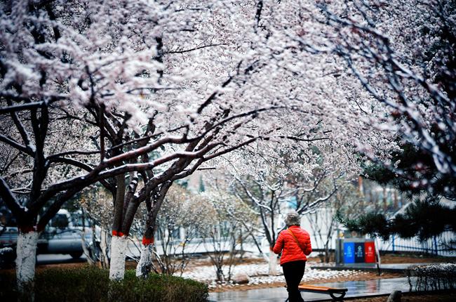 春雪落西寧